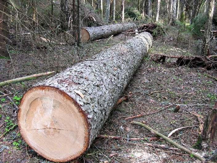 Прокуратура спасла деревья на проспекте Победы