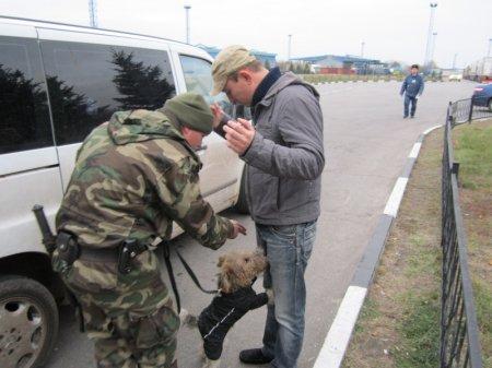 Служебные псы на границе помогли найти наркотики у россиян